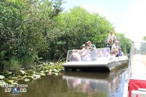 Na Flórida, tem tantos jacarés e crocodilos que há vários parques temáticos