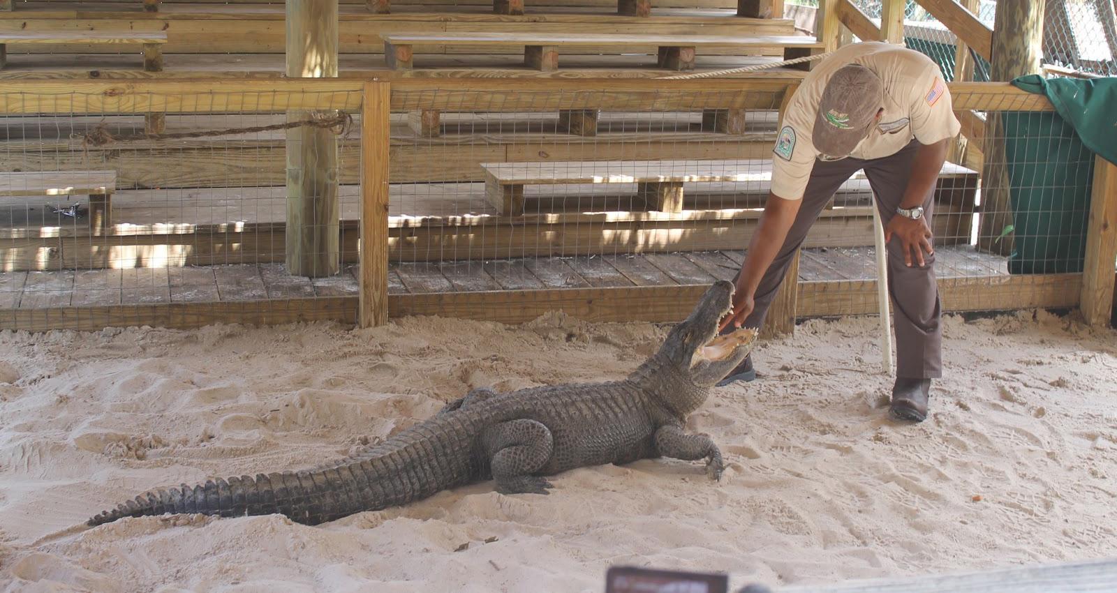 Ataques de jacarés: turistas devem ter cuidados na Flórida