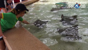 Orlando-Sea-World-153-
