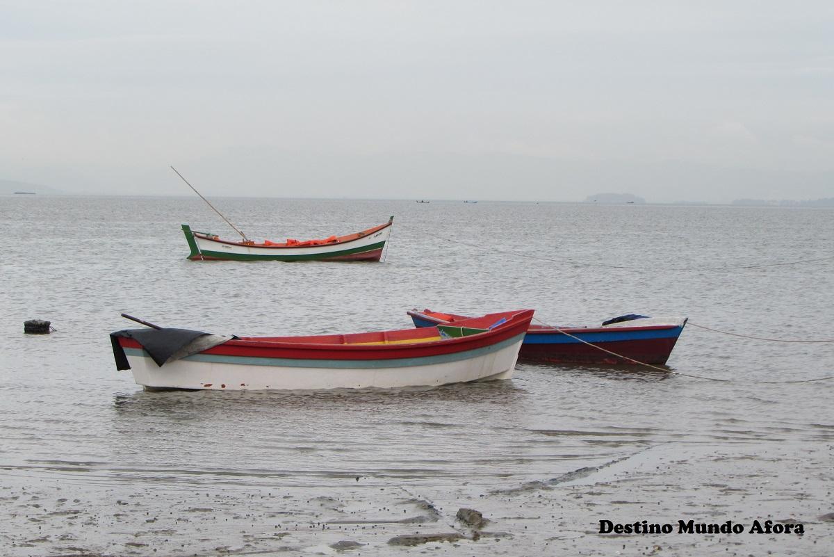 Um dia diferente na Reserva Extrativista do Pirajubaé (Resex), em Florianópolis