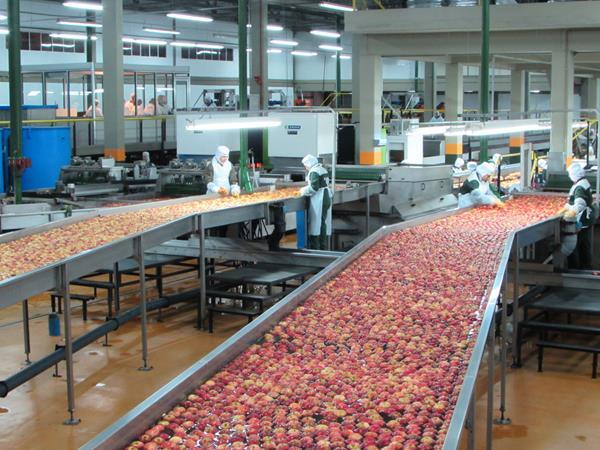 Visita ao Grupo Fischer, em Fraiburgo: conhecendo processamento de maçãs