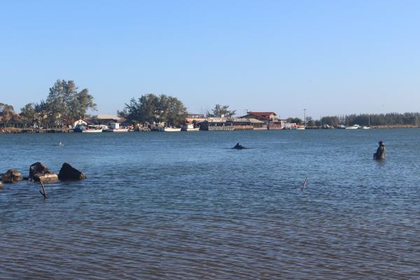 Pesca artesanal com ajuda dos botos em Laguna
